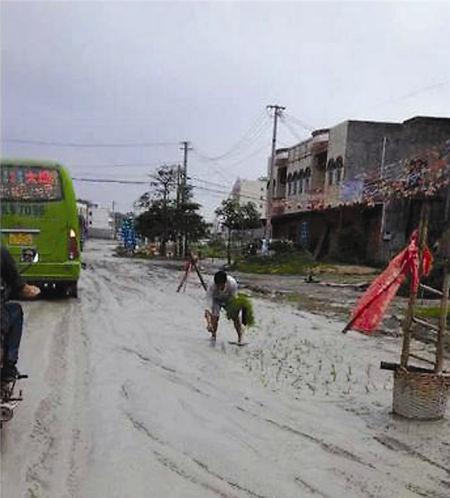 村民在合浦县山口镇325国道种秧苗。网络截图