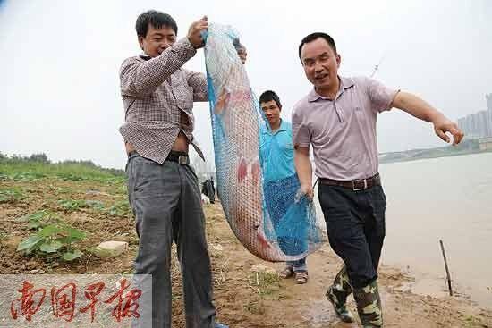 郑先生(右一)钓得的大鱼。记者 唐辉吉 摄