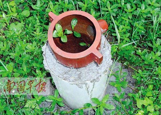 有的井口已长出了植物。 记者 邓振福摄