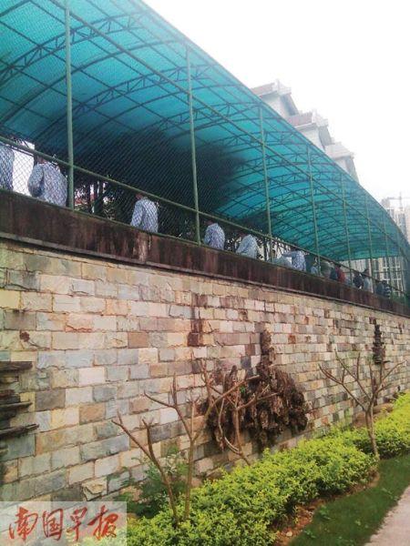 南宁市第五人民医院,住院的精神病患者与外界隔了一层铁丝网。图片来源:南国早报