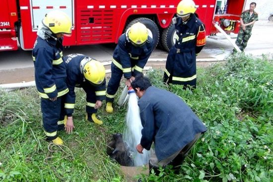 随着消防员往井口内注水,小牛借助水的浮力,慢慢浮出井口。张銮玉摄