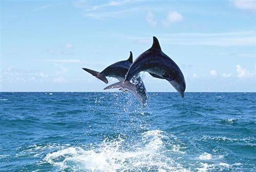 钦州三娘湾海豚 图:新浪图库