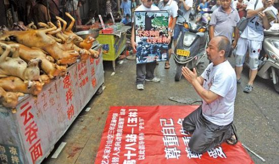 广西玉林狗肉节图片图集 广西柳州莫菁图片 金华狗肉节杀狗图片