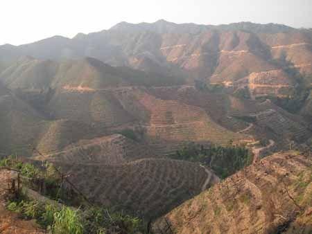 九十九顶林场2009年至2011年度存在无证滥伐行为