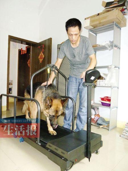 张兵带着狗狗在跑步机上锻炼。