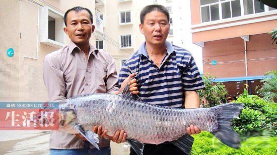 渔民曾从邕江捕上一条大青鱼。