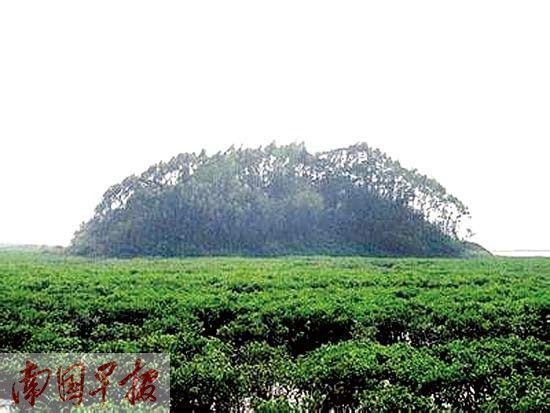 位于钦州的抄墩岛。自治区海洋局海域和海岛管理处供图