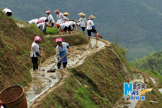 在广西龙胜龙脊梯田,壮族农妇平整田地准备插秧