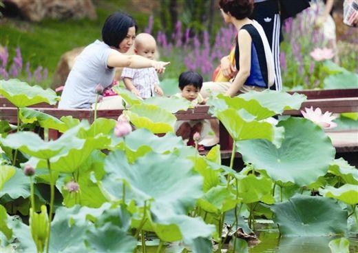 市民在青秀山风景区荷花池游玩