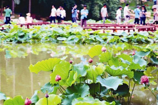 青秀山风景区环山秀坪西南侧的荷花池