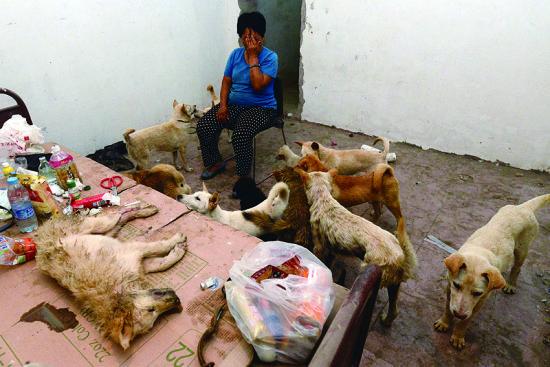 一只狗在抵津后死掉,杨晓云说,虽然死了,但没有成为盘中餐。摄法制晚报记者刘畅