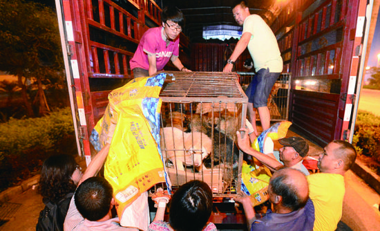 动保人士将在玉林二环路安置的狗运回天津、重庆,这些狗多数是拿钱从狗贩子手中买回来的。摄法制晚报记者刘畅