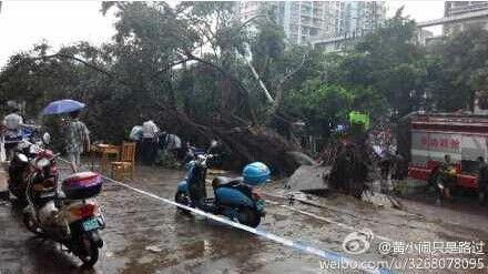 南宁明秀大学路口,一大树突然倒伏致1死3伤。图片来源网络