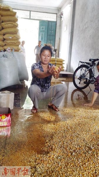 7月26日,存放在商铺里的大量玉米被雨水浸泡。记者 周伟武 摄