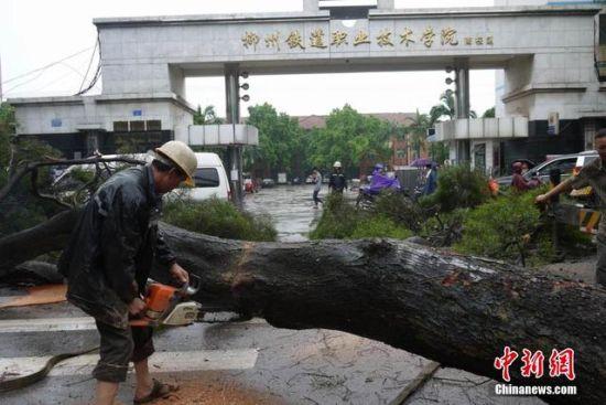 图为被风雨刮倒的大树阻碍道路通行。
