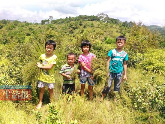 兄妹四人在山上割草。记者 袁夏岚 摄