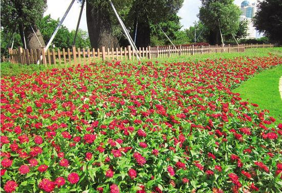 南湖公园鲜花绽放迎接游客。