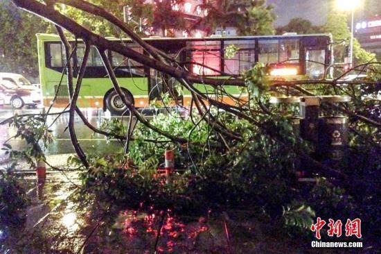 """9月16日23时,台风""""海鸥""""在越南北部沿海登陆。""""海鸥""""给广西南部沿海地区带来强风雨影响,多个市县气象台发布台风、暴雨预警信息。图为16日晚,狂风将南宁市新民路上的树枝折断。中新社发 洪坚鹏 摄"""
