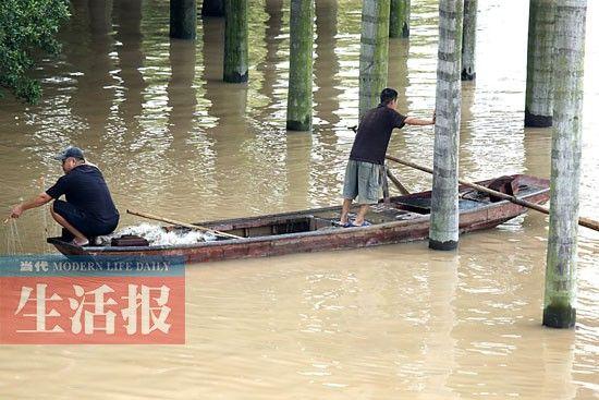 市民在淹没的大王椰树林里捕鱼。