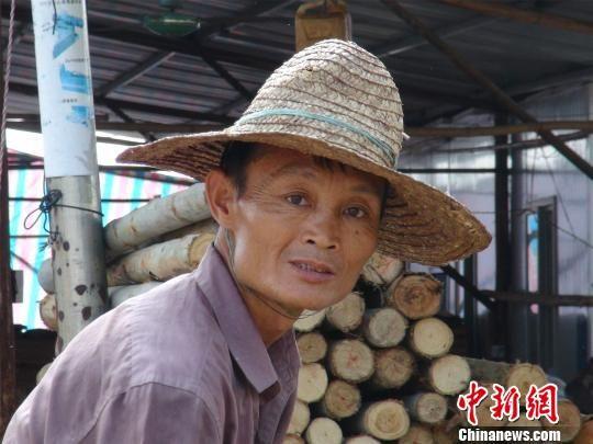 广西南宁锯木工莫新昌因长相似中国首富马云而备受关注。 曹旺摄