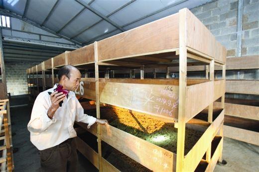 农绍国搭架子养殖地鳖虫。图片来源:当代生活报