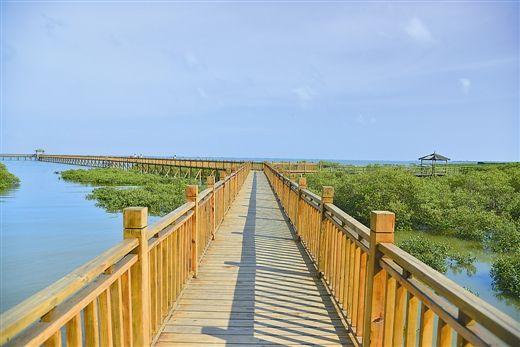 东兴竹山村蜿蜒于红树林的栈道,成了吸引游客的景观之一 图源:陈义才