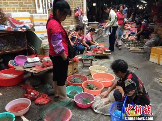 10月23日,广西北海市南珠市场的一名小贩向过往市民兜售网袋中的野生鸟类。 陈燕 摄