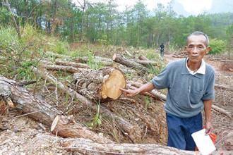 桂林平乐:村干弄虚作假卖松林