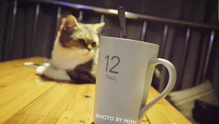 猫咪主题餐厅