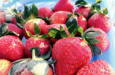 【七坡草莓园】