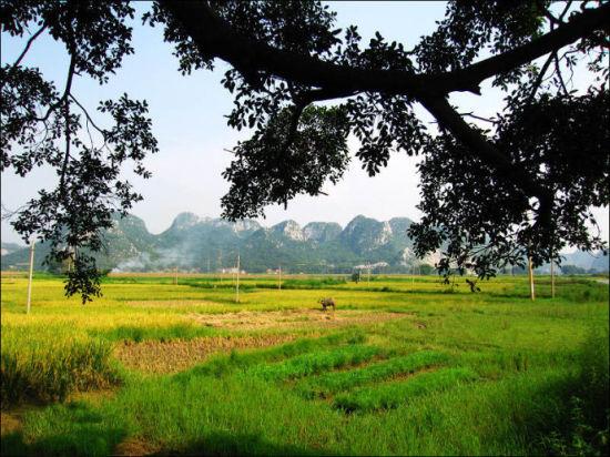 上林三里洋渡的乡村风光 图:新浪博主/温小虎