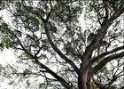 来宾象州温泉之乡古树参天蒲苇飘扬