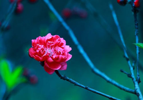 春季游玩广西大学桃花梨花芬芳满天下