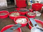 用工业双氧水浸泡鱼翅厨师:公开的秘密