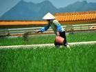 楼顶稻田——车间的天然空调