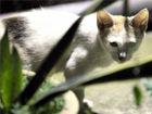 南宁10多只流浪猫惨死引发争议