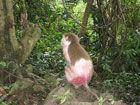 龙虎山猴子掉毛严重景区:掉毛不是病(图)