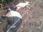 村民私设电网7只羊触电而亡警方将强拆(图)