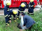 小水牛跌入水井消防员往井内注水施救(图)