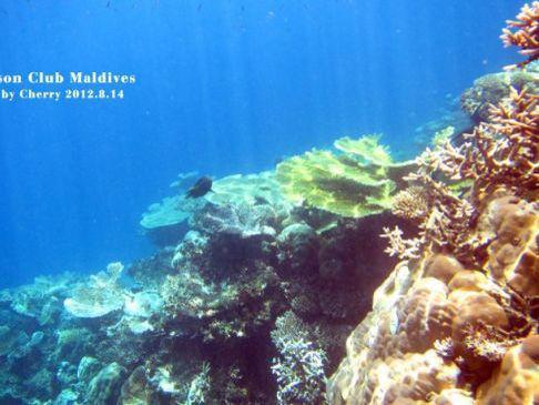 深蓝与海水的诱惑深海潜水体验